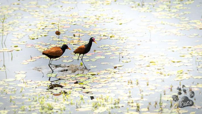 Pantanal - artenreiches Feuchtbiotop