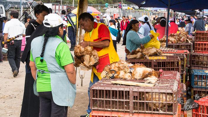 Viehmarkt in Otavalo - noch ein paar Hühner gefällig?