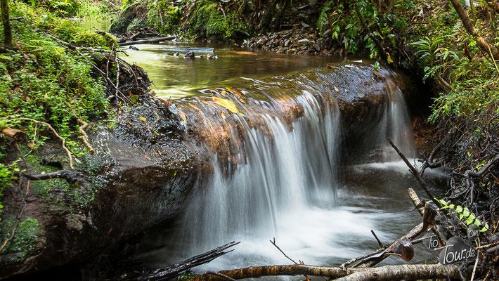 Parque Pumalin - zum Lago Negro