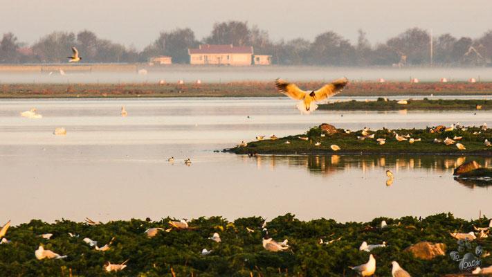 Vogelparadies Varberg