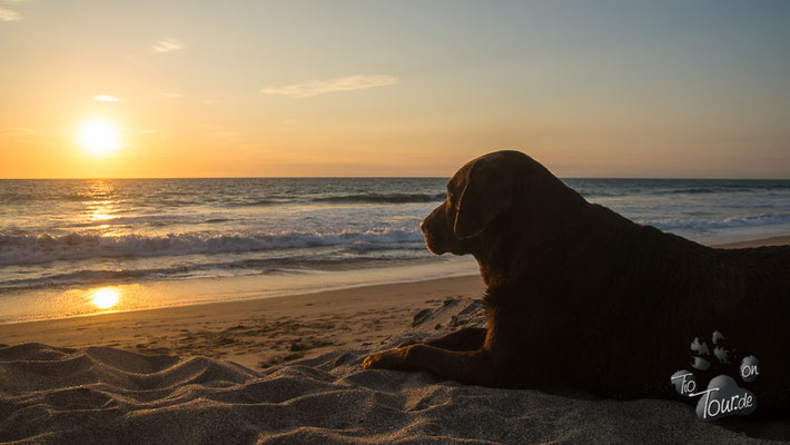 Zufriedener Blick in den Sonnenuntergang