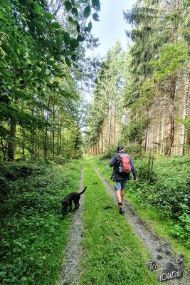Wanderung durch den Neuenburger Urwald