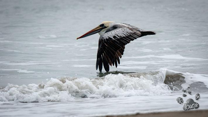 Nationalreservat Paracas