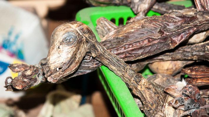 Hexengasse - getrocknete Lamafoeten für ein langes Leben