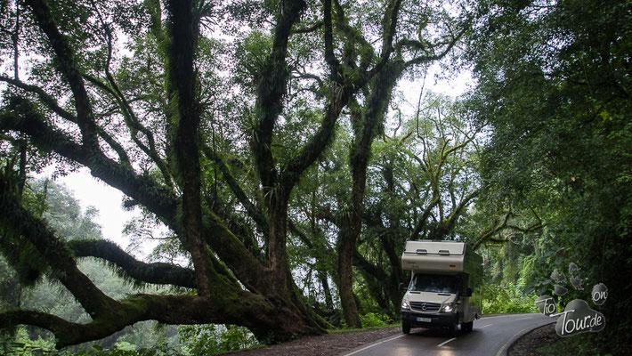 Nebelwald nach Purmamarca