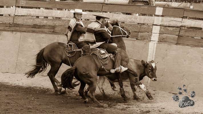 Rodeo in Chonchi