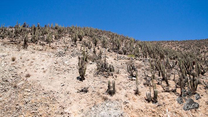 unterwegs im Elqui Tal