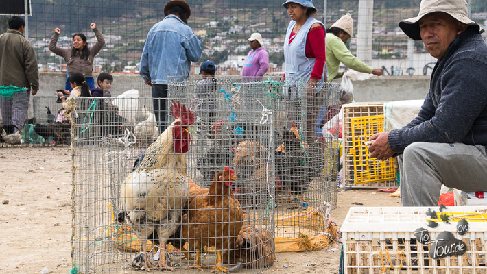 Viehmarkt in Otavalo - eng und gemütlich ???