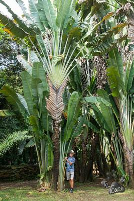 Medellin - Botanischer Garten