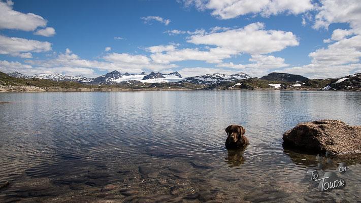 Sognefjellet - ein Bad im Gletschersee