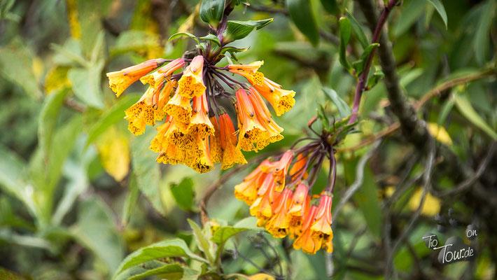 Ecuadorianische Flora