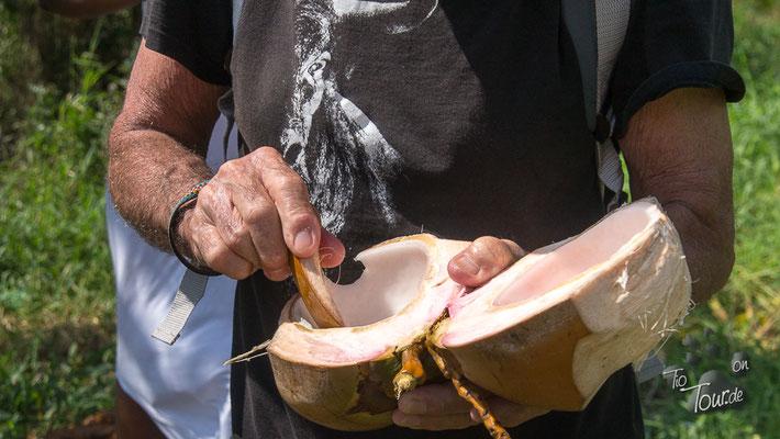 Das Fruchtfleisch der jungen Kokosnüsse ist noch ganz weich