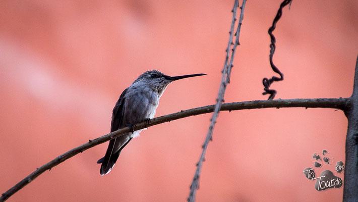 Arequipa - Kloster Santa Catalina, obwohl der Kolibri bestimmt auch woanders hinfliegen darf ;-)