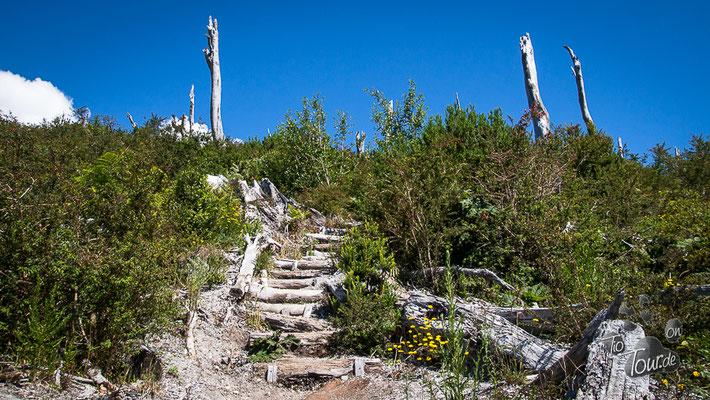 Parque Pumalin auf dem Weg zum Vulkan Chaitén