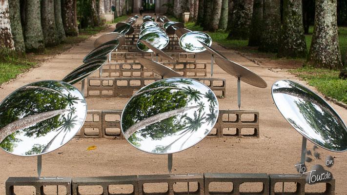 Botanischer Garten - Spiegel in der Palmenallee