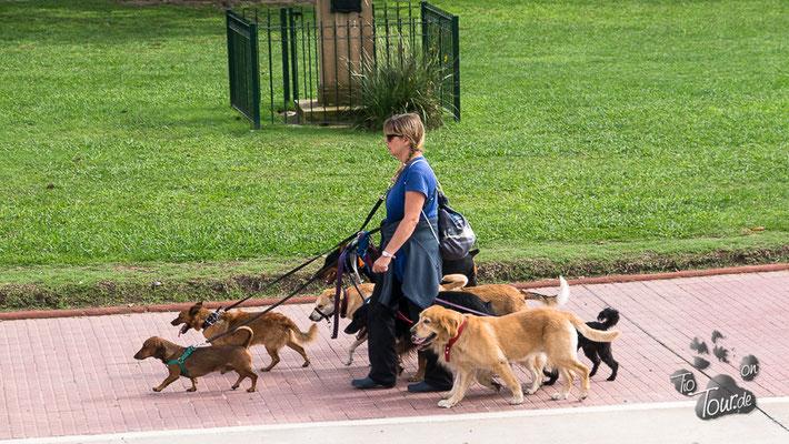 Paseadores de perros - die Hunde-Gassigeher in Buenos Aires