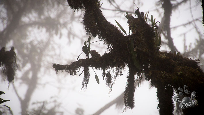 Camino de la Muerte - Mystisch im Nebel
