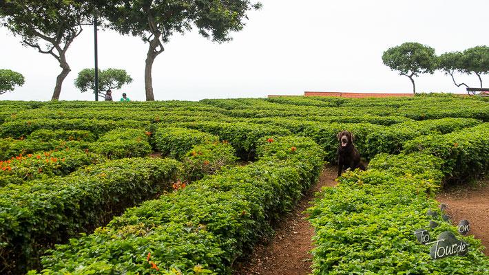 Parque del Amor - Heckenlabyrinth - ein toller Spielplatz für Jaron