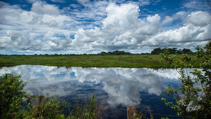 Pantanal - herrliche Spiegelungen