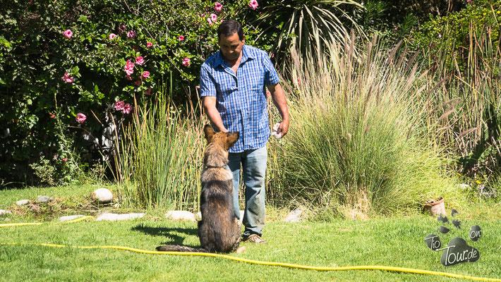 Vicuña - Hundeschule