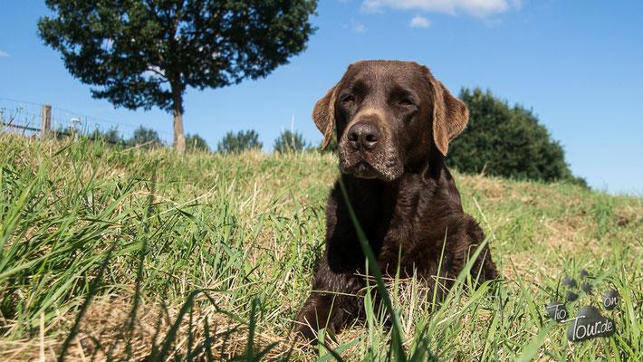 Herzlake - ein Hundeparadies an der Hase