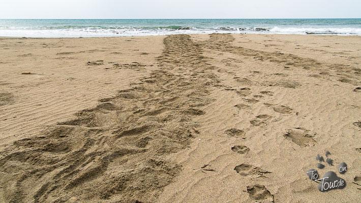 San Clemente - Spuren der Meeresschildkröte