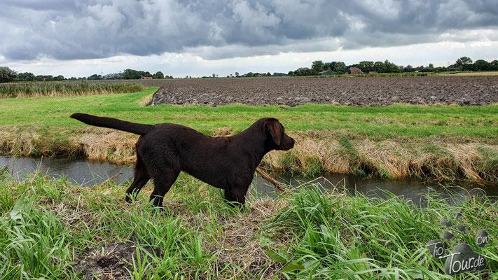Der Kanal vor dem Deich hat ein steiles Ufer - da musste Frauchen mich retten...