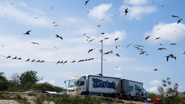 Playa Machalilla - der frisch gefangene Fisch kommt direkt in den Kühltransporter