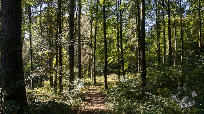 Forstarboretum Neuhäusel