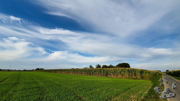 Maisfelder wohin das Auge blickt...