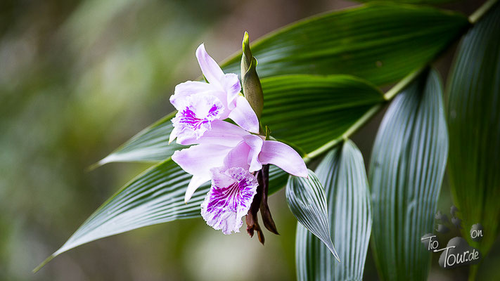 Nationalpark Podocarpus - Orchideen wachsen hier wie Unkraut - warum nicht bei mir ???
