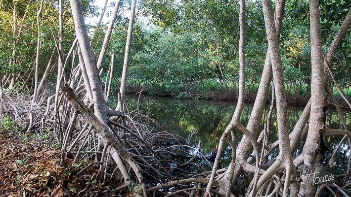 Camping Cispata - Mangroven Richtung Strand