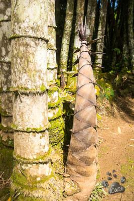 Botanischer Garten, Bambusspross