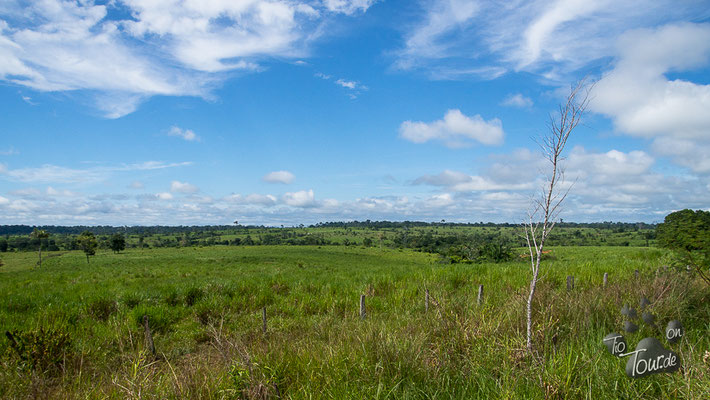 Richtung Rio Branco - endlose Weideflächen