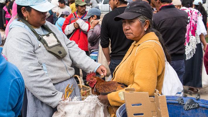 Viehmarkt in Otavalo - handelseinig...