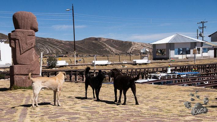 Neue Freunde am Titicacasee