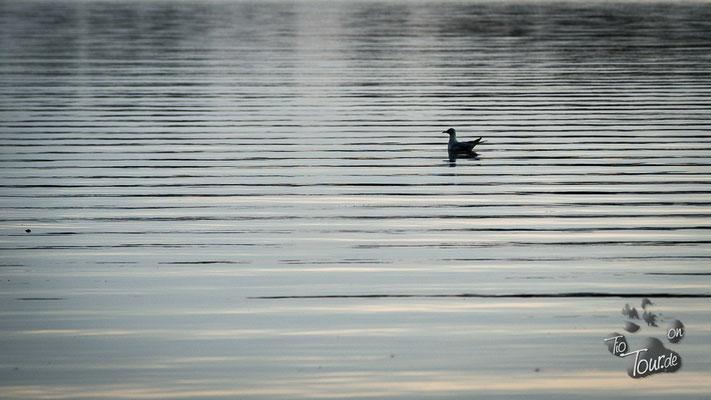 Jabelscher See