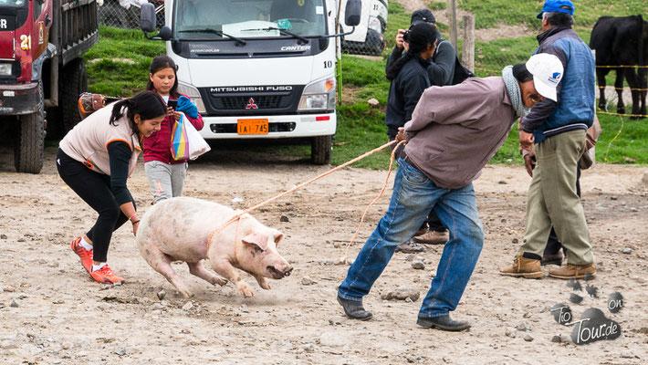 Viehmarkt in Otavalo - wie?? Du willst nicht ???