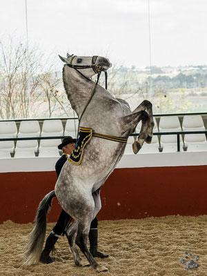 Jerez - Yeguada de la Cartuja