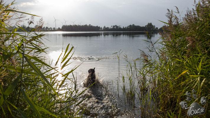 An dem Angelsee in Weener kann man prima Wasserläufer jagen