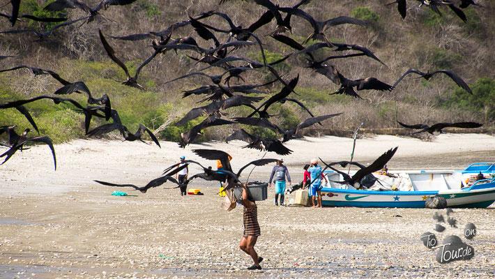 Playa Machalilla - wer kriegt den Fisch ??