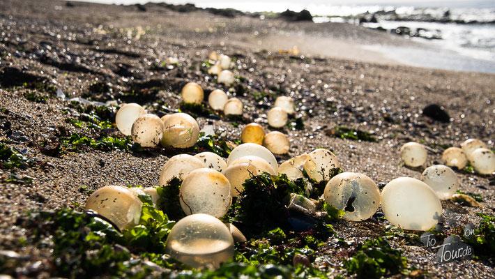 Playa La Paloma