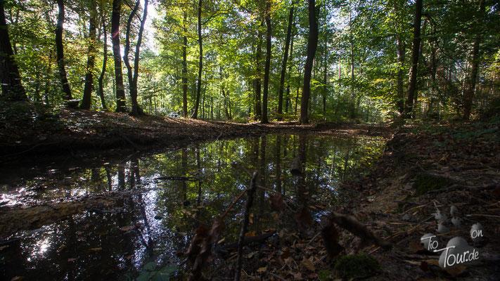 Herbstspaziergang im Westerwald