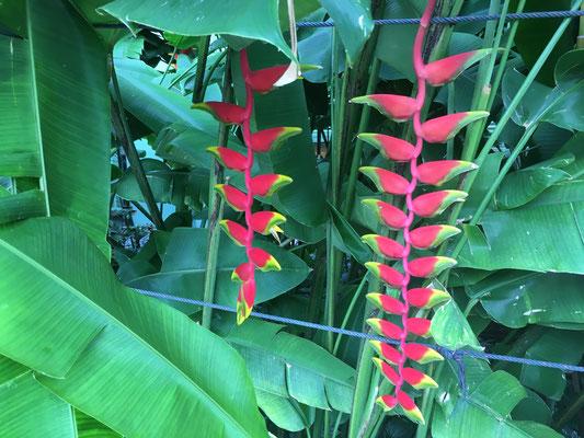 very nice plant
