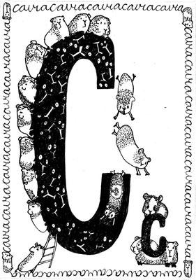 C is van Cavia