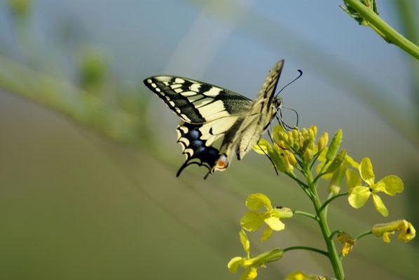 Schmetterling,  Fotografie von Eva Maria Henning-Bekka auf der Aachener Kunstroute 2016