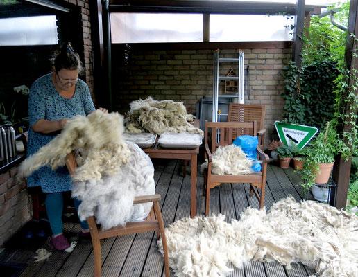 Kerstin beim Sortieren der Wolle.