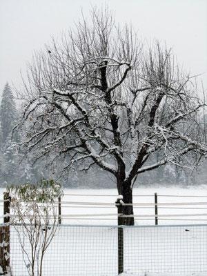 und im Winter