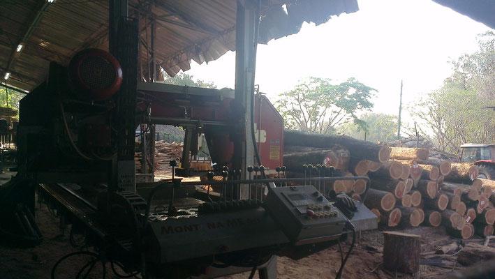 Sägewerk in Kolumbien mit Teakholzstämmen.