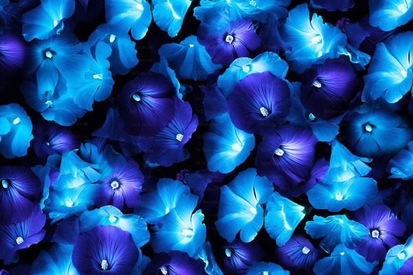 Magic Flowers 1 | 3:2